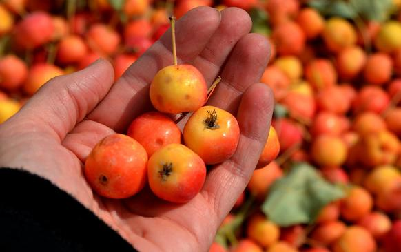 Gala crab apples, which are quite small, are part of the mix.