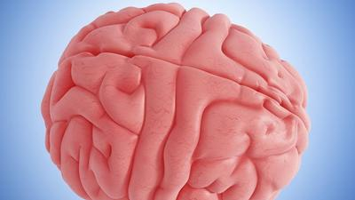 Brain activity found after 'brain death'