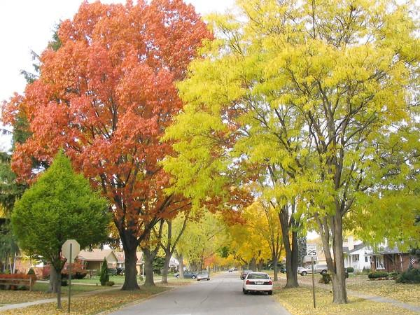 Elmhurst Road in Mount Prospect during the fall season.