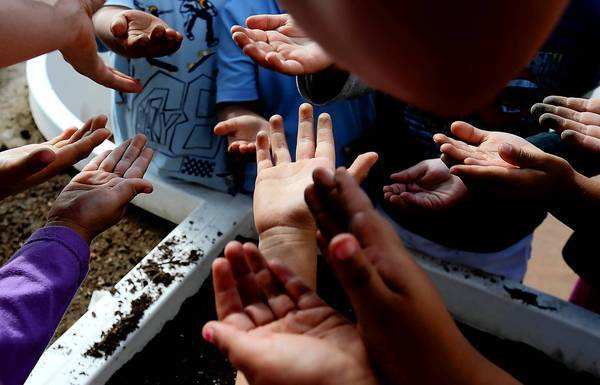 Pre-kindergarteners hold out their hands for seeds to plant in a garden at Sixth Avenue Elementary School in Los Angeles. A nonprofit group started by Kimbal Musk, the brother of Elon, has raised $1 million and is seeking another $1 million to install gardens at L.A.-area schools.