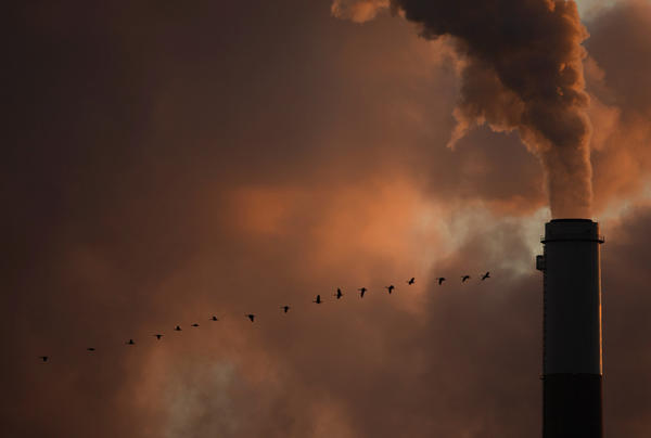 A flock of geese fly past a smokestack at the Jeffery Energy Center coal power plant near Emmitt, Kan.