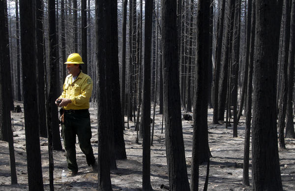 Soil scientist Todd J. Ellsworth of U.S. Forest Service surveys the burned area of the Stanislaus National Forest in Sonora, Calif.