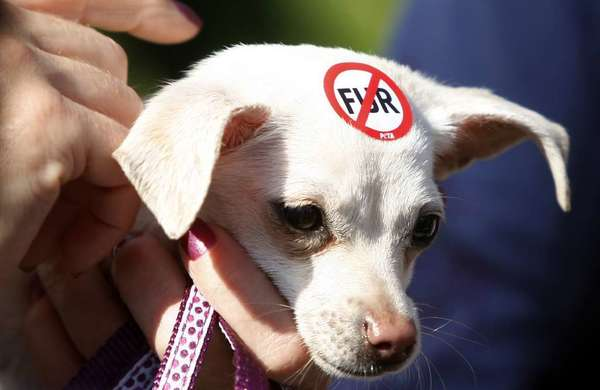 A WeHo dog expresses the city's sentiment in a a 2011 anti-fur demonstration. West Hollywood's ban on the sale of fur, passed in November 2011, goes into effect Saturday.