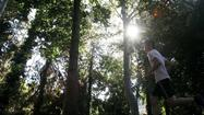 Cool shade awaits at Fern Dell in Griffith Park