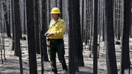 Rim fire's effects likely to last for decades to come