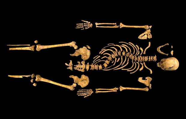 The excavated skeleton of King Richard III, found at an excavation site where a church once stood in Leicester.