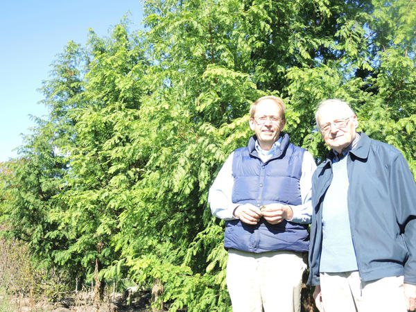 Landscaper Richard Hoffman (left) and Gustav Uhlich, both of Petoskey, are hoping to spread dawn redwoods throughout Northern Michigan.