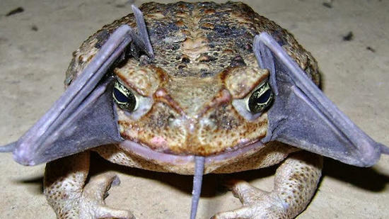 Related story: Toad tries to eat bat, park ranger gets this crazy photo