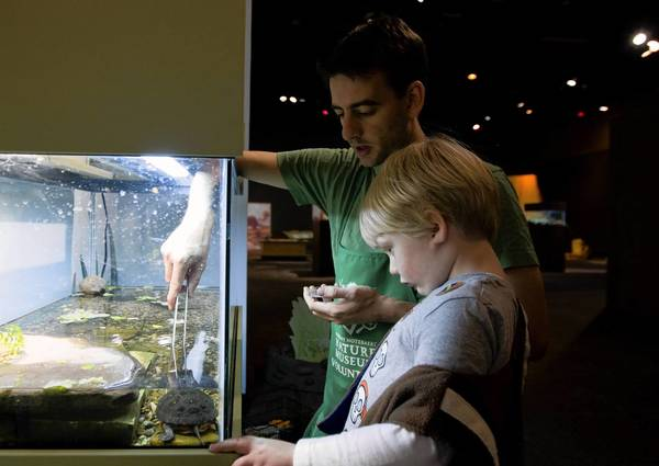 "Joey Schuman, 3, watches as animal care volunteer Jon Meisenbach feeds a Spotted Turtle at the new exhibit ""Animal Secrets"" at the Peggy Notebaert Nature Museum."