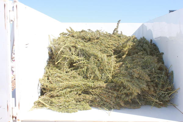 Truck filled with 530 pounds of processed marijuana