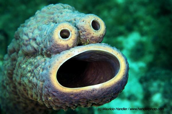Cookie Monster sea sponge