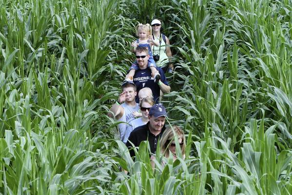 Corn mazes are an old tradition at harvest time. Long & Scott Farms near Zellwood build a 7-acre corn maze each year where visitors can get lost for hours on end. Each year is a different theme with pictures, clues and games to make learning fun.