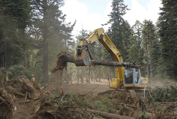In this photo taken Sept. 25, an excavator removes trees that were bulldozed for a firebreak in the battle against Rim fire along Dodge Ridge in the Stanislaus National Forest, near Tuolumne City, Calif.