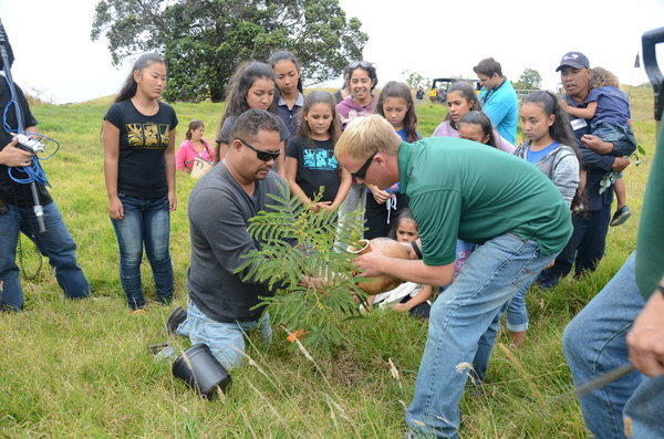 Visitors to the slopes of Mauna Kea plant a young koa tree in what was once a sprawling forest.