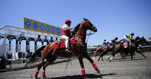 Gov. Jerry Brown has approved a number of measures related to horse racing, including one bill that could put the Del Mar race track in the running to host the prestigious Breeders' Cup. Above, an outrider watches as horses leave the gate during the opening day of horse racing at the racetrack in July.