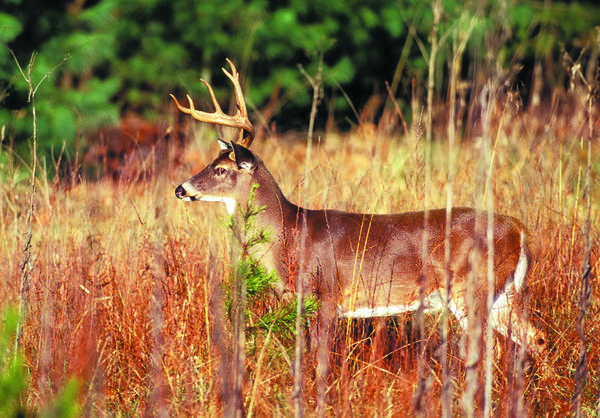 Rules of the deer hunt schurz petoskeynews for Michigan fishing license price