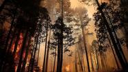 Yosemite's burned areas are alive