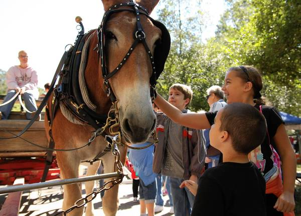 Erica Rogers pets Travis the mule at the 2010 Newport News Fall Festival of Folklife.