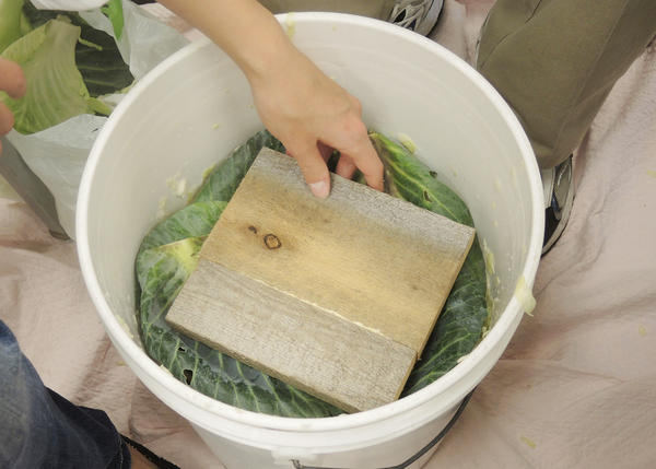 Petoskey culinary students learn that after the cabbage is chopped, pounded and salted, it is placed in plastic buckets, covered with cabbage leaves and wood to ferment for two to three weeks. Buckets are covered with a towel.