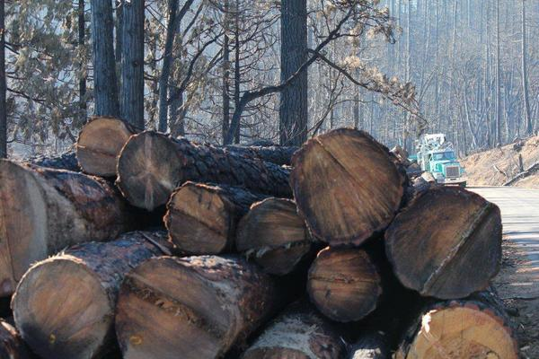 A stack of salvaged logs cut from a forest near Yosemite National Park is seen in September.