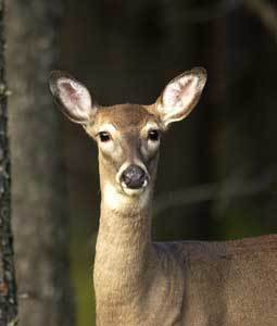 The Department of Natural Resources advises Northern Michigan hunters to not hesitate to fill their antlerless permits.