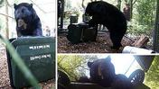 Archive video: Bear proof garbage can put to the test