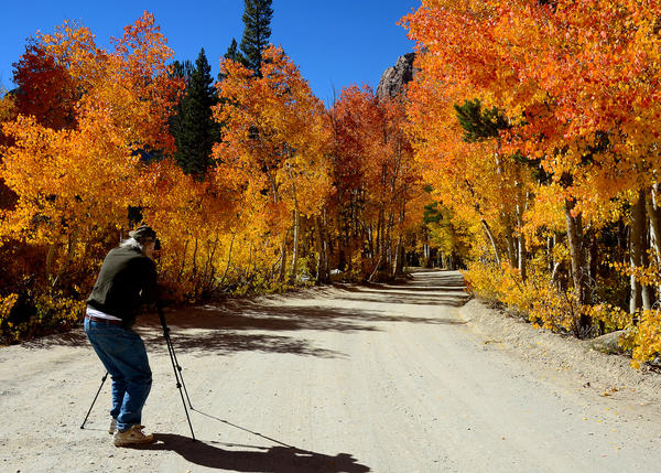 A photographer captures spectacular fall colors on North Lake Road at Bishop Creek Canyon last week.