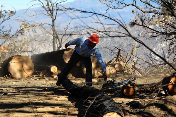 Sam Cover, 40, reaches for his chain saw while doing emergency contract work for San Francisco Water and Power in a portion of the Stanislaus National Forest damaged by the Rim fire.
