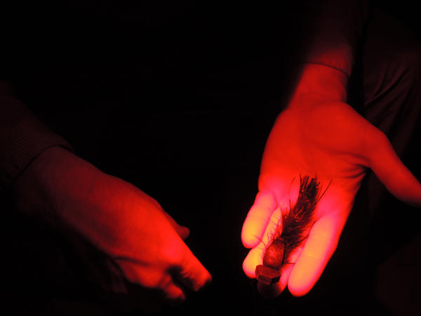 Guide Ethan Winchester with Boyne Outfitters shows a mouse fly. The red hue in this photo is because of his headlamp, which has a red light option. Red light interferes less with your night vision.