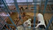 Romanian law ordering death for stray dogs stirs protest worldwide