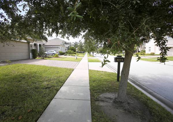 Oak trees line the area between the sidewalks and the street in the Westyn Bay community as seen on Palio Ct. in Ocoee. The Ocoee homeowners association plans to cut down the more than 450 oak trees in its gated community, claiming they could create dangerous hazards for pedestrians.