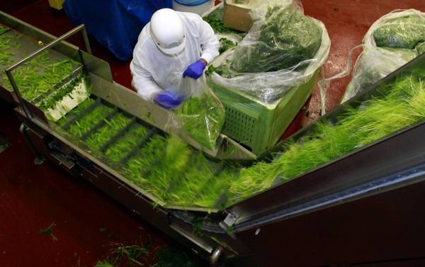 Green vegetables, including wheat grass, celery, parsley and spinach, move down the line before being turned into juice at the new 264,000-square-foot Evolution Fresh factory in Rancho Cucamonga.