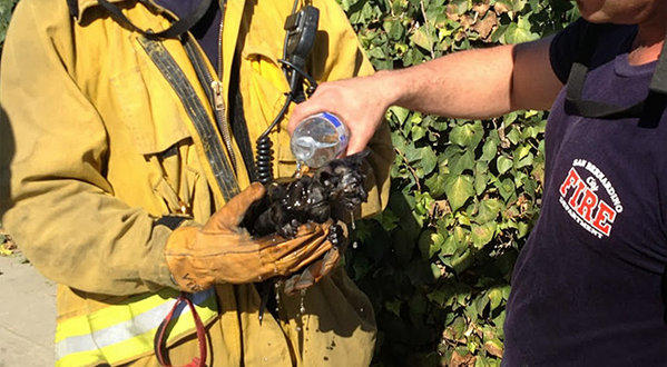 Firefighters saved a kitten from burning house.