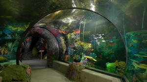 Virginia Beach approves aquarium 'Adventure Park'