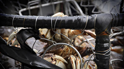Shutdown Threatens Alaska Crab Industry