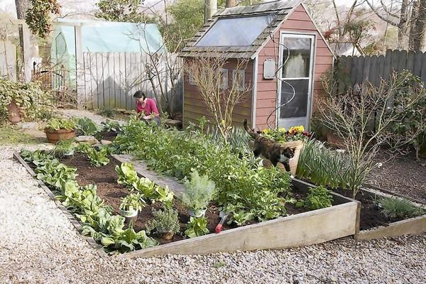 Whether you have a backyard garden or use a plot in a public one, there are tips on how to make your fall harvest last a little longer.