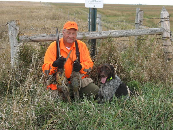 Aberdeens Phil Mitzel and his Deutsch-Drahthaar pointer, Kansas, had success last year on public land during the resident-only pheasant season.