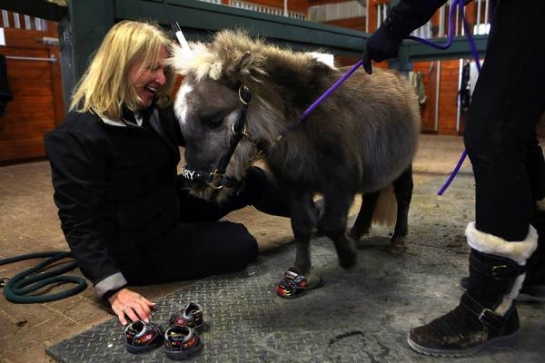 Jodie Diegel of Mane in Heaven with miniature horse Mystery.