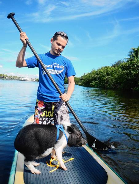 Andrew Miller, of Fort Lauderdale, and his minature pet pig Sir Winston take a paddle down the Middle River near George English Park in Fort Lauderdale.