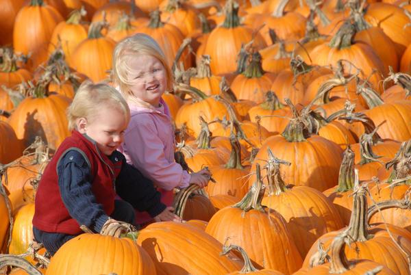 Choosing a pumpkin is part of the fun at East Jordan's Pumpkin Festival.