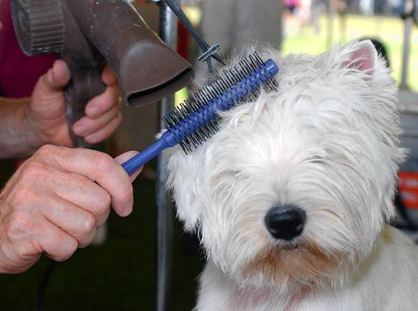 Shedding varies greatly by breed, but all dogs and cats tend to lose fur at this time of year and benefit from grooming.