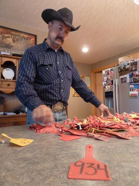 South Dakota rancher Scott Reder, who lost 200 head of cattle in a recent blizzard, displays ear tags of his dead animals on Friday.