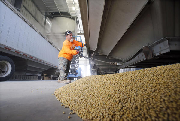 Luis Valentine, an employee at the Concord Grain Elevator, closes the bottom of a grain truck after unloading soybeans last week.