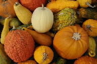 The parks and recreation department is hosting a pumpkin decorating contest on Wednesday.
