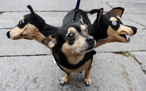 Pets in Halloween costumes - RedEye Chicago