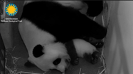 The panda cam is back on! Government offices are open, too.