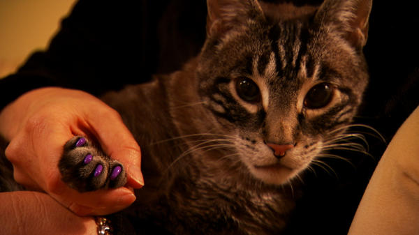 """A scene from """"The Paw Project."""""""