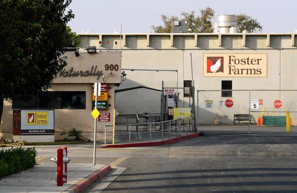 Foster Farms has begun vaccinating birds for Salmonella Heidelberg. It's also feeding chickens probiotics to combat salmonella in their digestive systems.