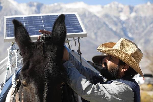 Gui Hatzvi adjusts a video camera on a mule's head during the trek to Los Angeles. A solar panel powers the camera and other electronics during the trip.