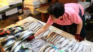 Fukushima fishermen watch recovery slip away